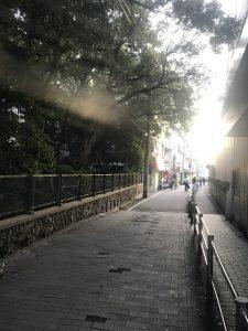 六甲八幡神社の北側の道の画像